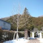 シンボルツリー雪